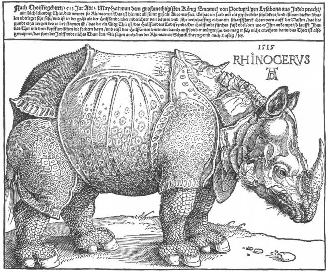 Dürer_rhino