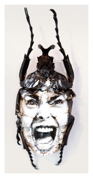 Acrylique sur scarabée Galerie AREA
