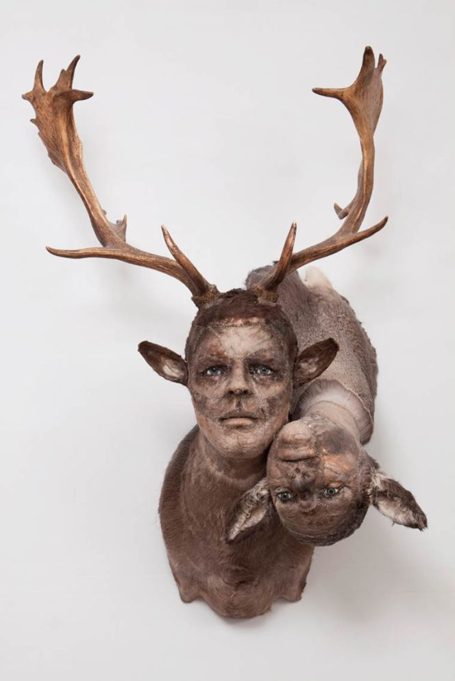 kate-clark-taxidermy-13