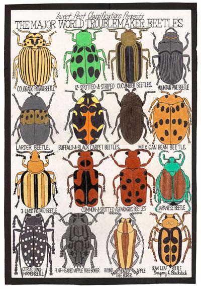 blackstock_beetles_02